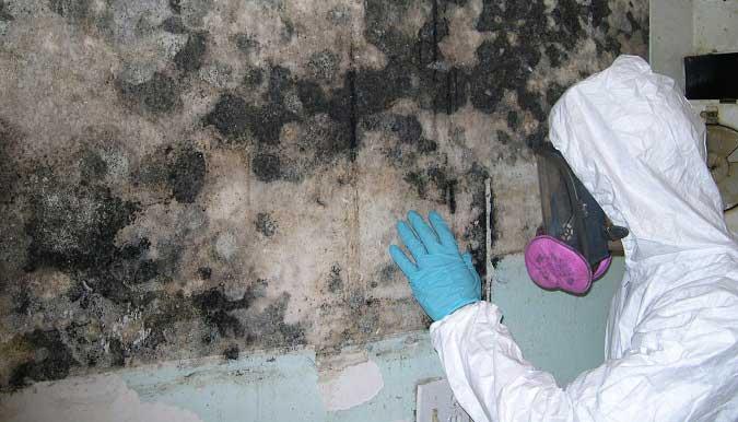 Как убрать грибок на стенах?